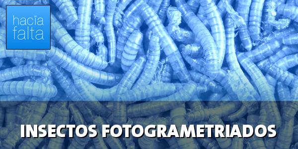#109: INSECTOS FOTOGRAMETIADOS